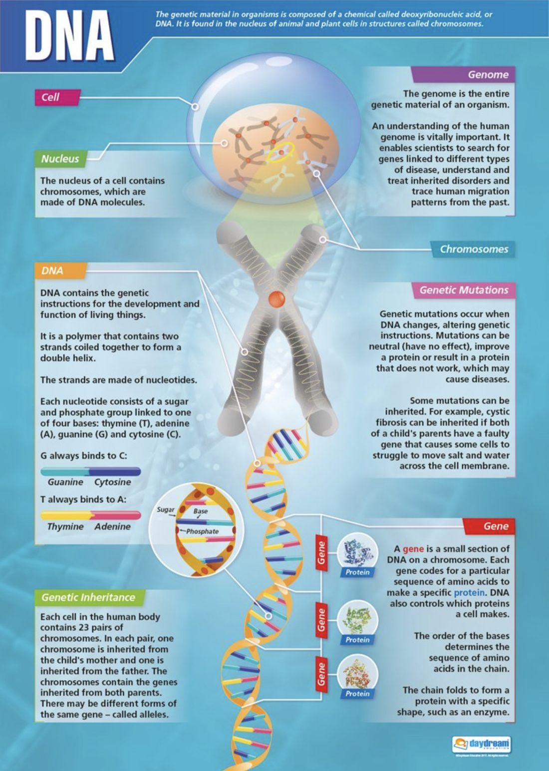 Clase De José Angel 1º 3º Y 4º Eso Inglés Salesianos Santander Página 25 Enseñanza Biología Biología Celular Biología