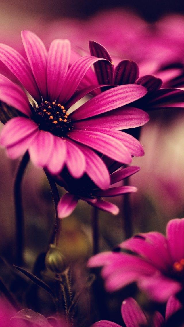 описание, картинки на дисплей телефона цветы страстные