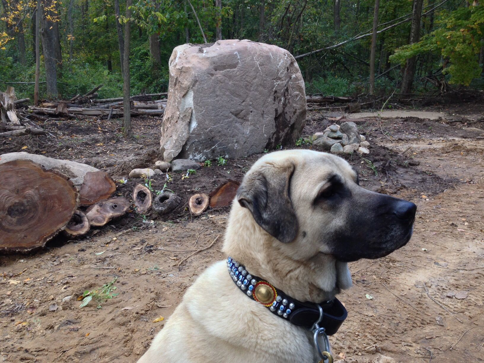 Kangal Dog Breeders In The Usa - The Best Dog 2018