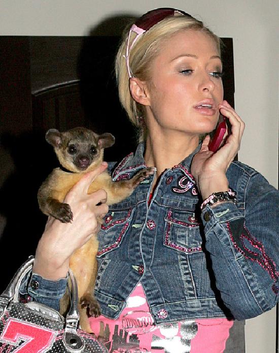 Paris Hilton Conoce Las Mascotas De Los Famosos Con Estas Fabulosas Tomas Paris Hilton Mascotas Famosos