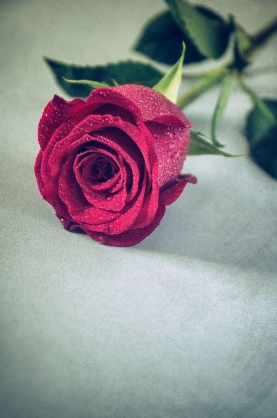 Red Rose Beautiful Rose Flowers Beautiful Roses Beautiful Red Roses
