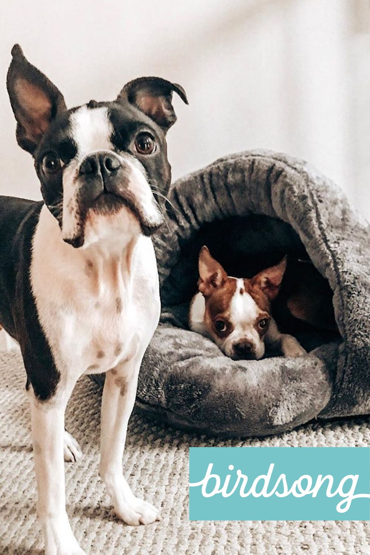 The Original Cuddle Pouch Dog pet beds, Cuddling, Cute