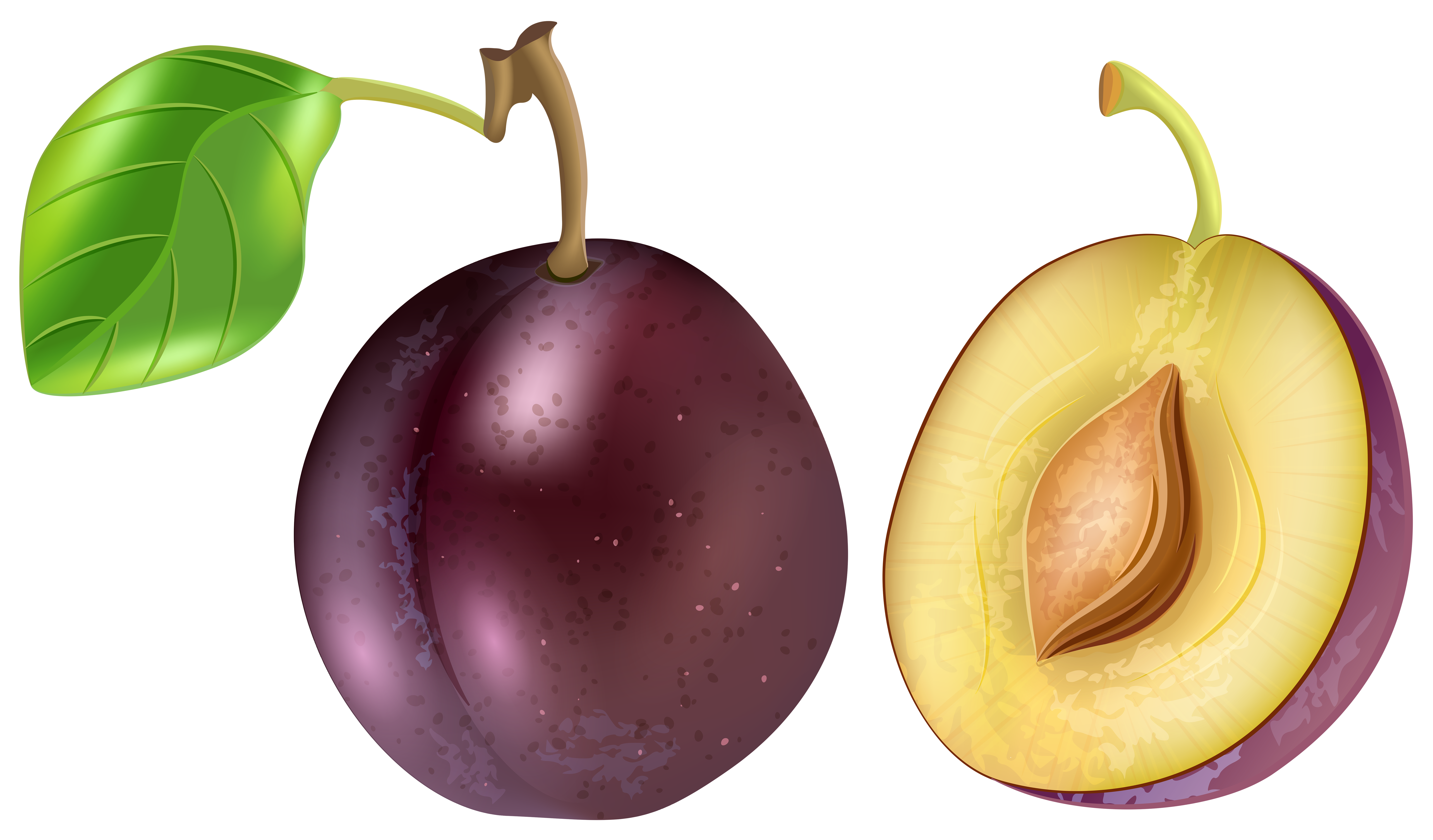 Plum Transparent Png Clip Art Image Gallery Yopriceville High Quality Images And Transparent Png Free Clipart Fruit Artwork Art Images Free Clip Art