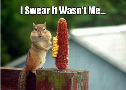 "Funny Pictures Quotes Memes Funny: Shaggy Squirrel: ""IT WASN'T ME"""