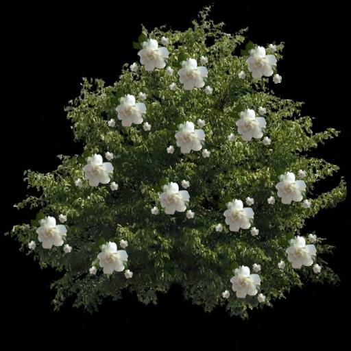 ForgetMeNot Garden Plant Flowers