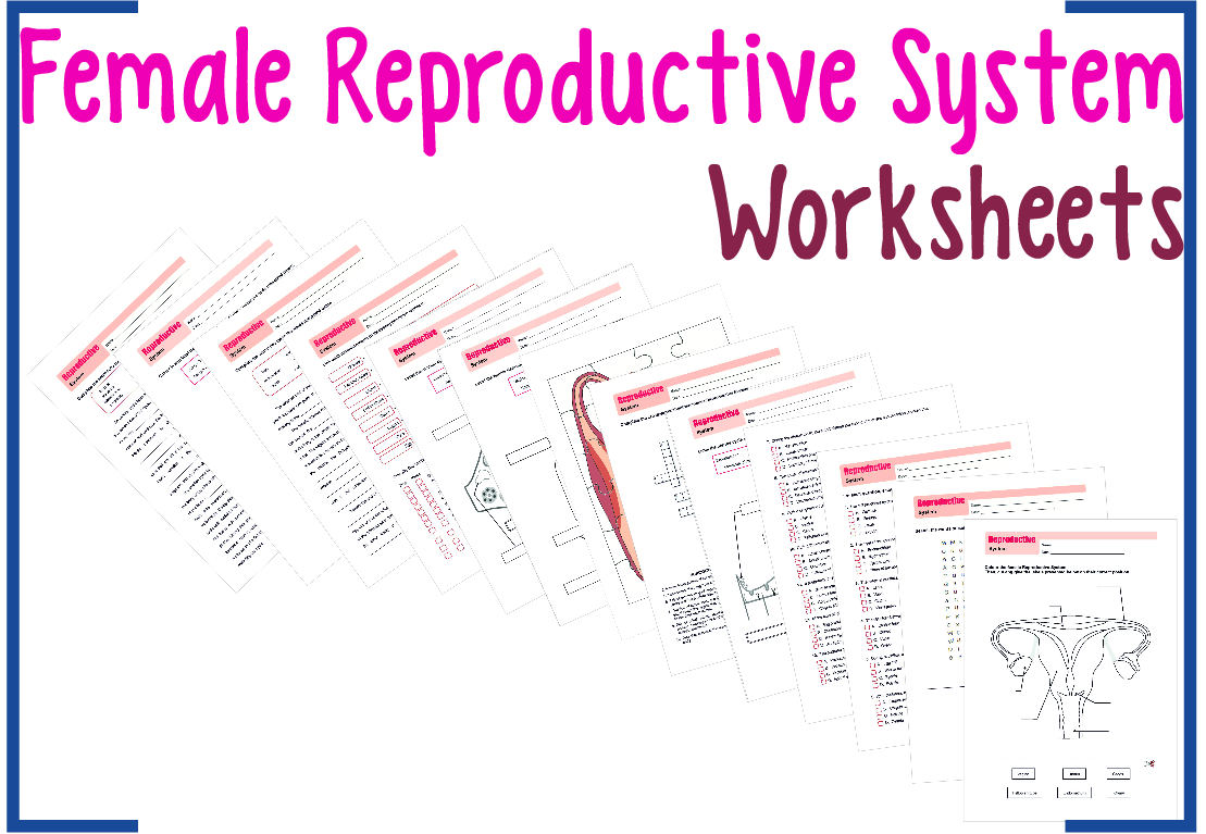 This product is a series of Worksheets about the Female Reproductive ...