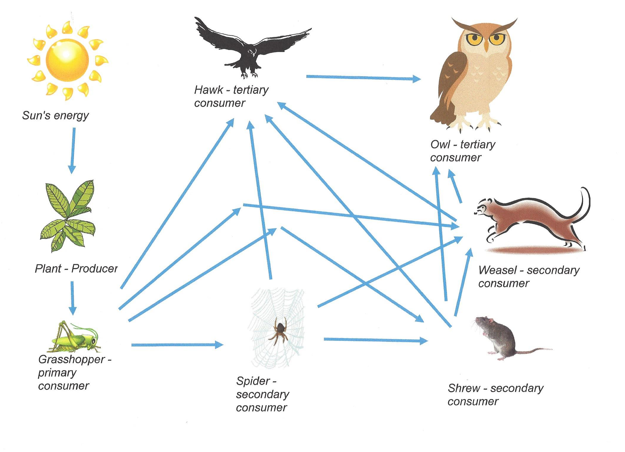 October theme: Creepy Crawlers - Food Web: Facts (Science Trek ...