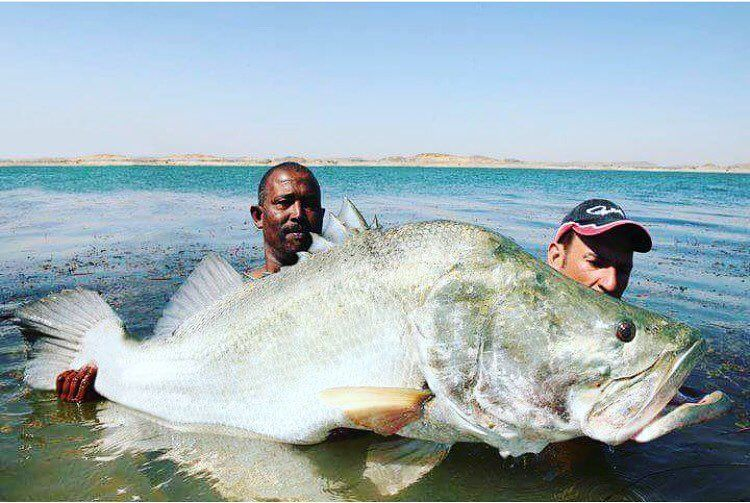 This is a big ass fish! #catchingfish #fish #fishing #fishinglife #monster  #monsterfish #monsterperch #bigfish #bigassfish #bigassperch #killedit  #offshore ...