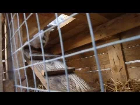 Comment fabriquer un clapier lapin lapin pinterest for Fabriquer un clapier a lapin