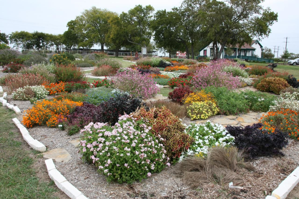 Master gardeners' picks are North Texas hardy