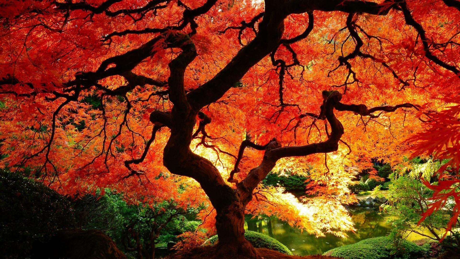 Humeur D Automne Ii Voyage Onirique Paysage Automnal Photographie Nature Belle Nature