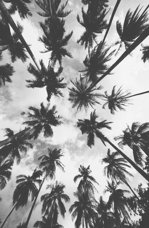 Palm Tree Photograph, Vertical Print, Black and White Art