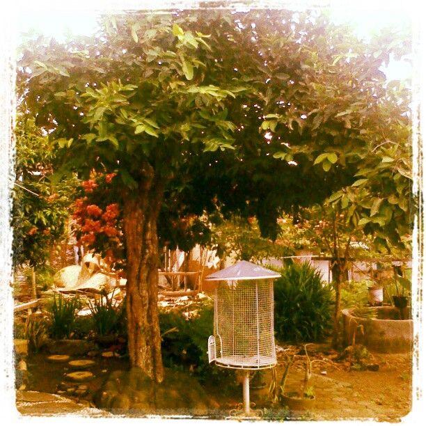 Dibawah pohon jambu what i love pinterest dibawah pohon jambu ccuart Gallery