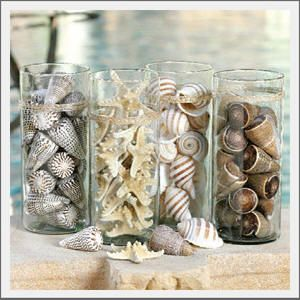 Fill Tall Glass Jars With Natural Sea Shells That Are All Alike To A Striking Display At A Beach