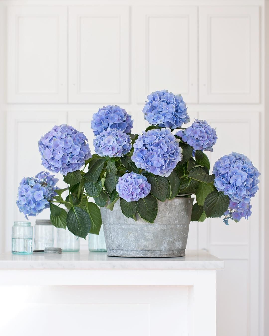Prettiest Blue Flower Earth