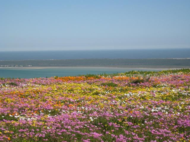 Western Cape Wildflowers