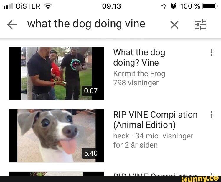 Pin On Funny Vine Memes