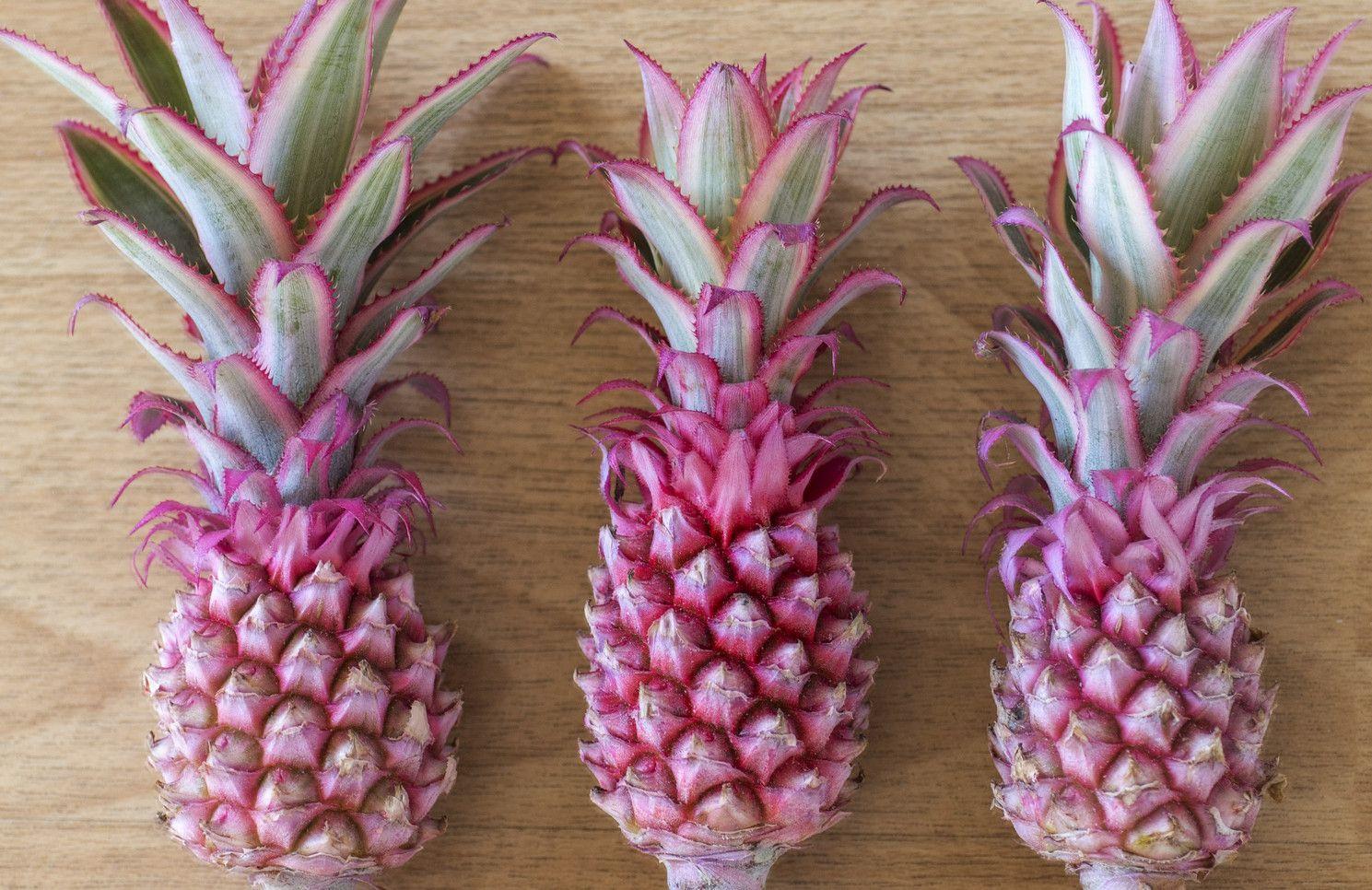 Bald Kommt Die Pinke Ananas Auf Den Markt Ananas Pink Erdbeeren