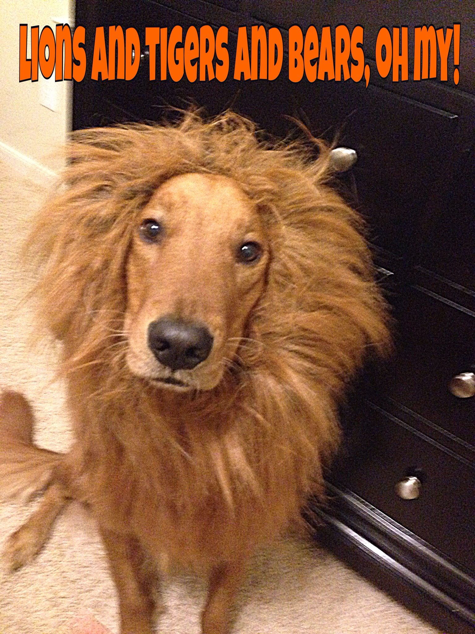 The Cowardly Lion Dogs Golden Retriever Dog Person Best Dog Breeds