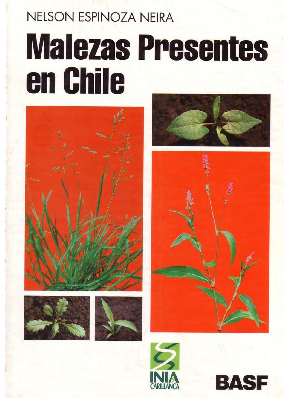 Malezas Presentes En Chile Plantas Nativas Plantas Silvestres Y