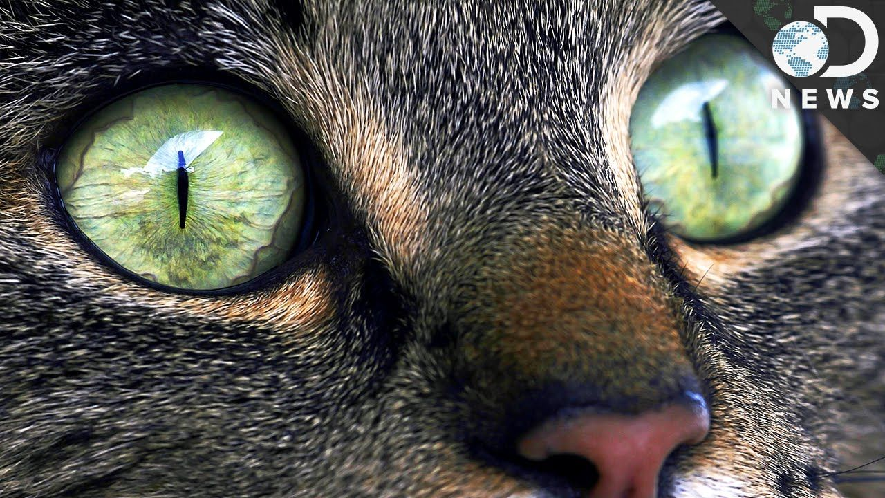 Why Does Your Cat Have Strange Eyes Cats Crazy Cat People Eye Close Up
