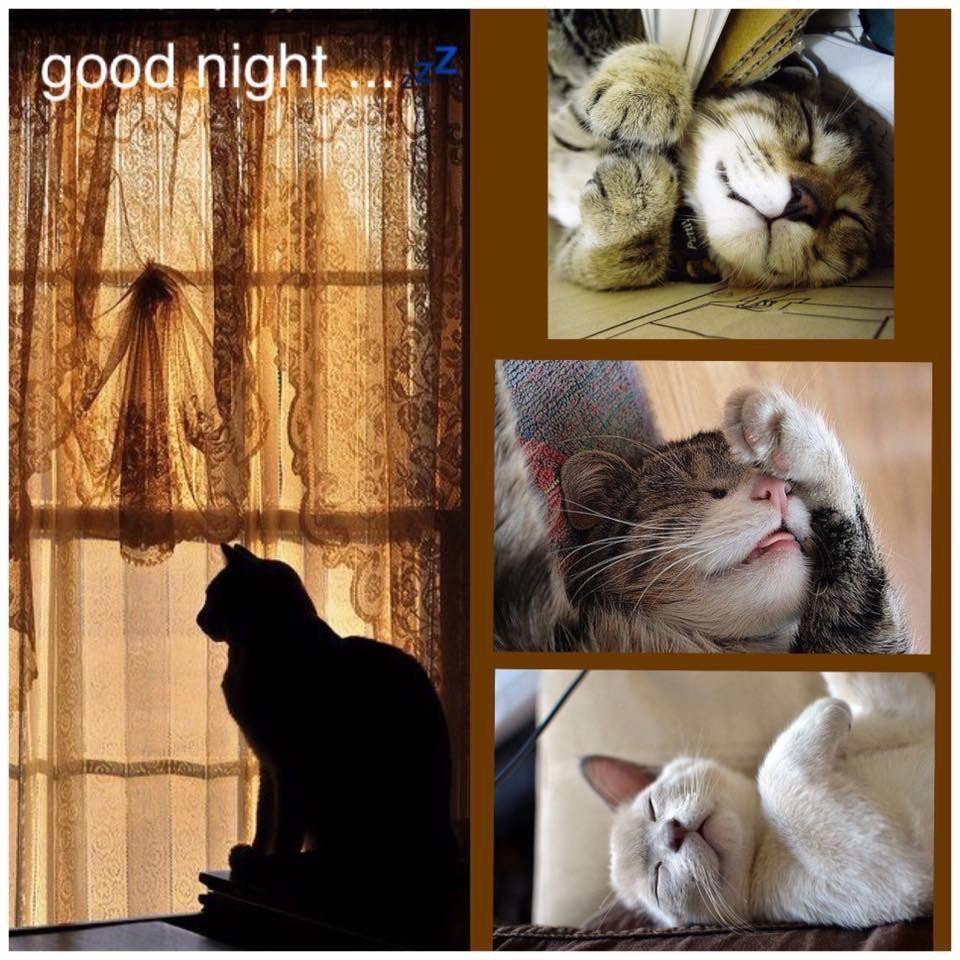 pin von jutta schreiber auf good night  collage bilder