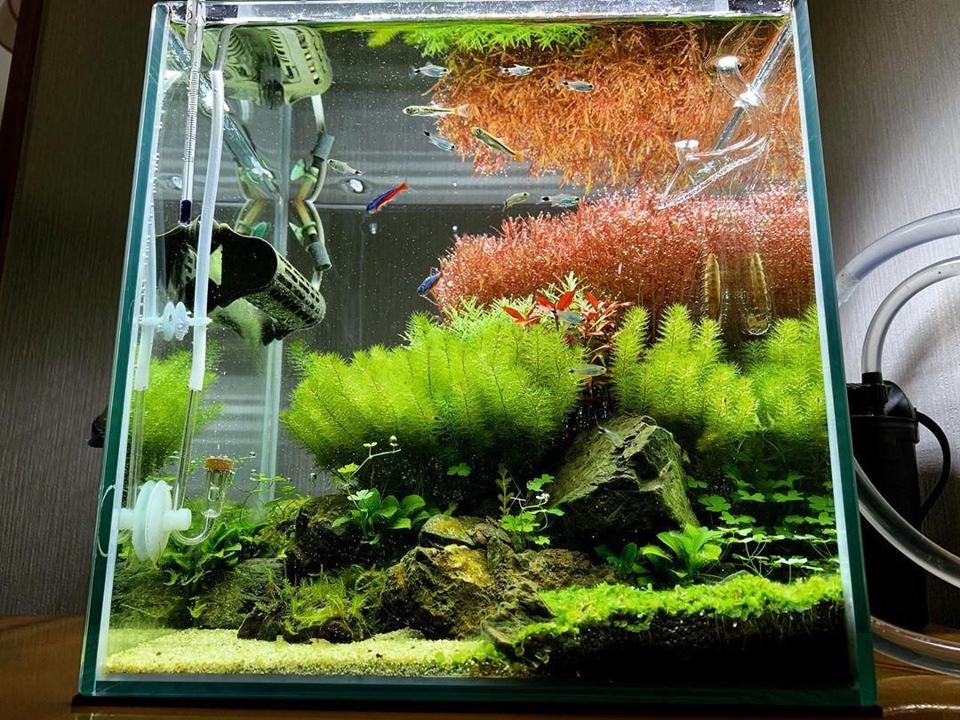 Nano Planted Tank Design With Impresive Aquatic Plants Planted Aquarium Tank Design Aquascape Aquarium