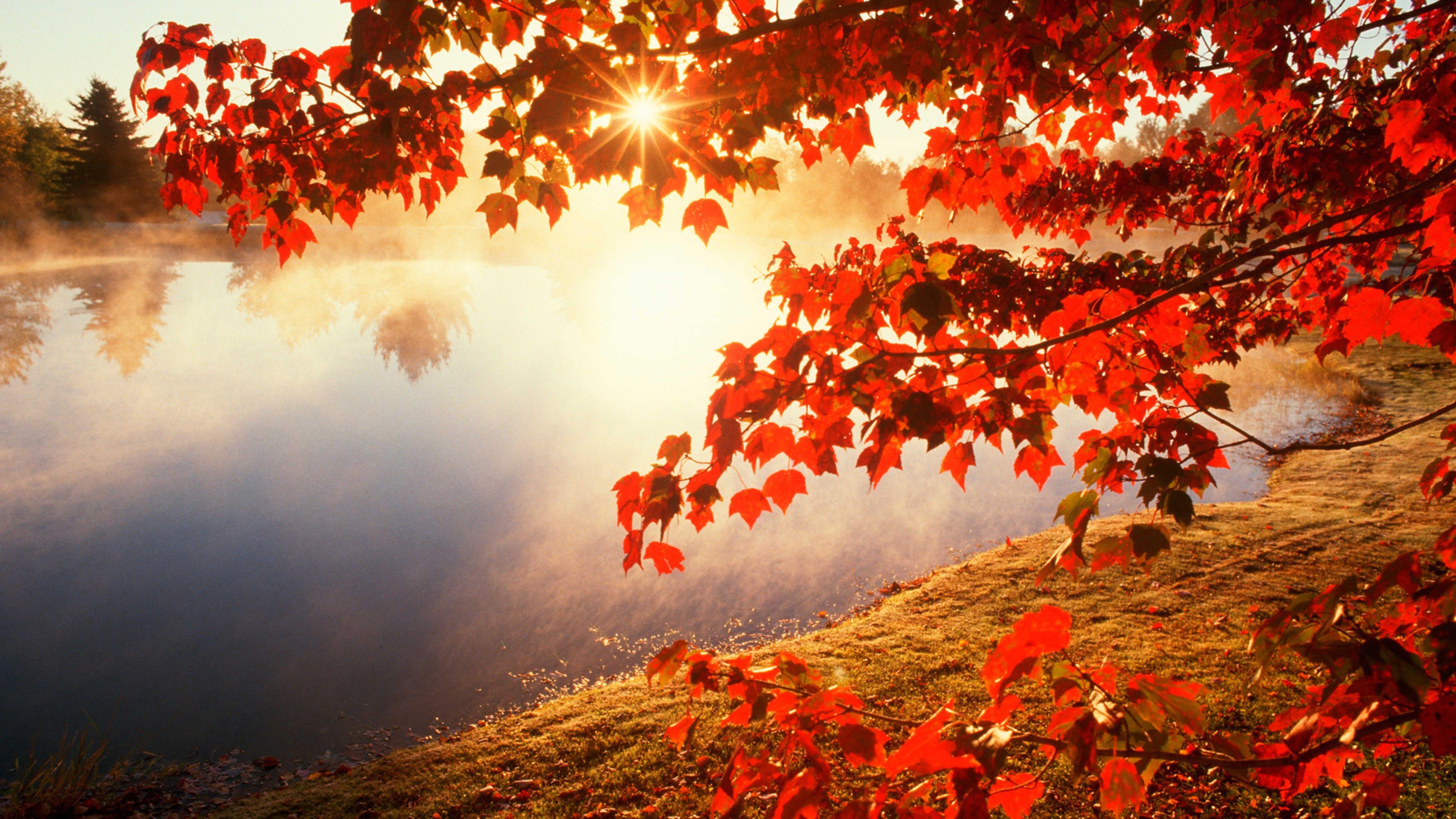 Good Morning Autumn Sunlight Hd Wallpaper Wallpaper Download 5120x2880 In 2020 Autumn Leaves Wallpaper Fall Wallpaper Autumn Wallpaper Hd