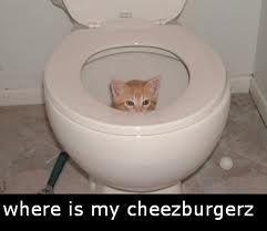 he must like cheezburgerz. whats a cheezburgerz?