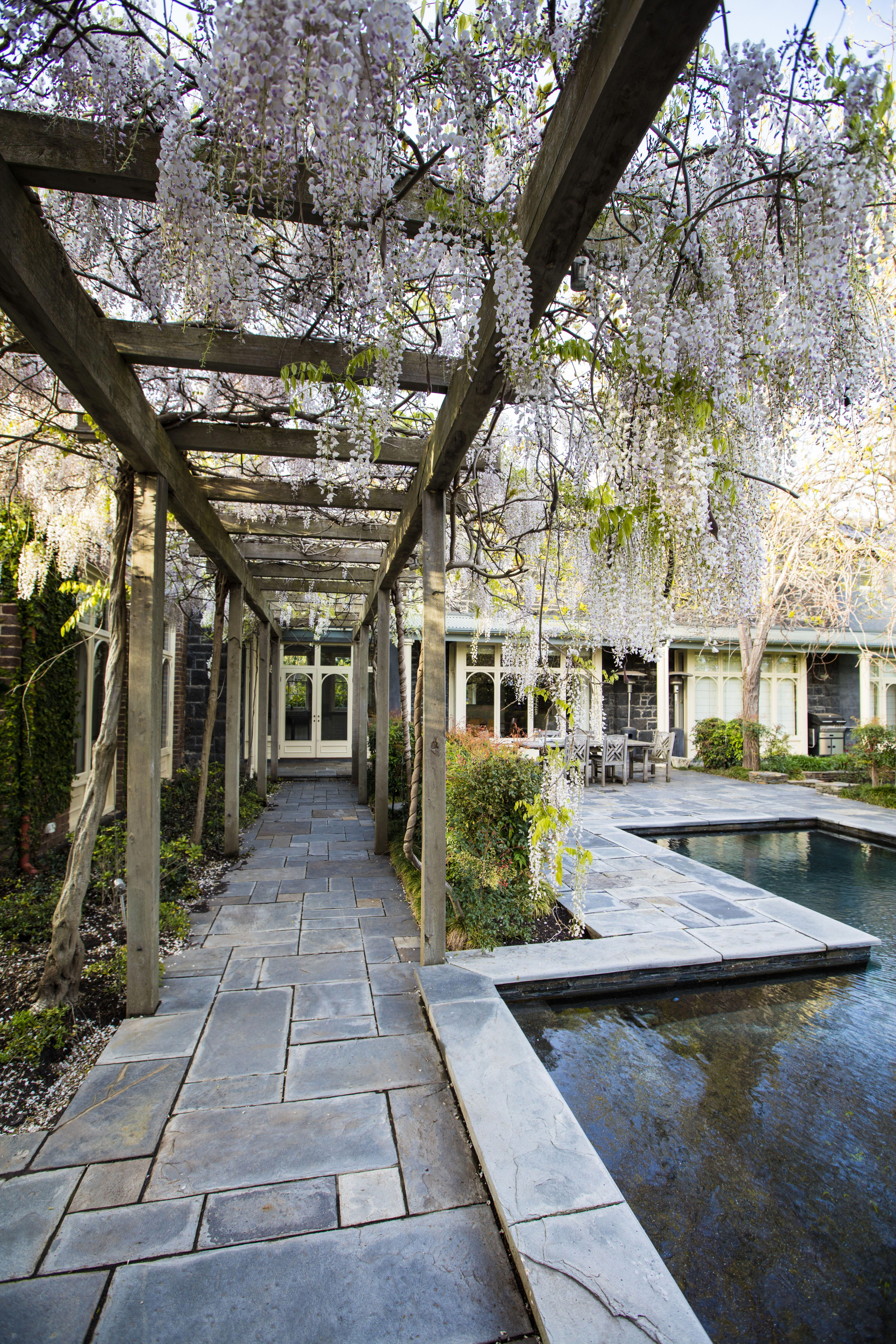 Japanese wisteria create a shady covering on this romantic ...