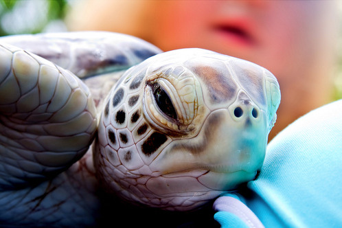 baby turtle | Sea Life | Baby turtles, Turtle, Red footed