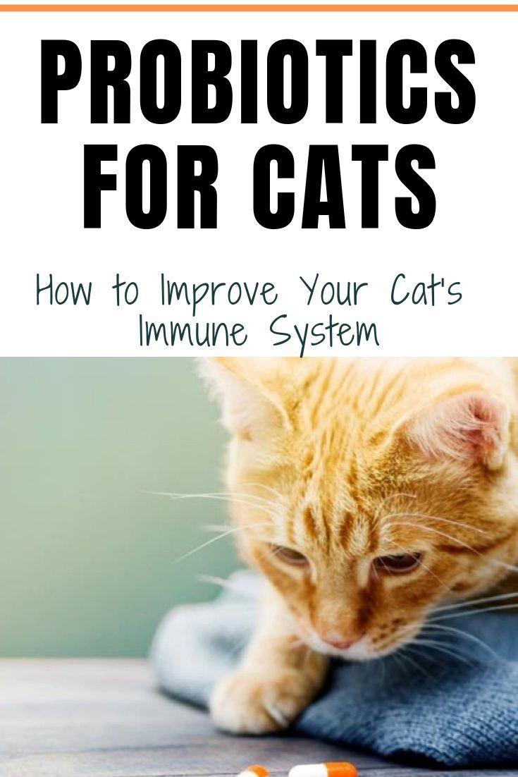Human Probiotics For Kittens