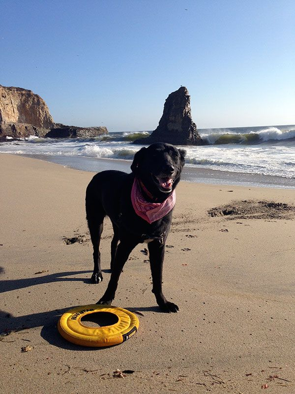 Where Can You Legally Take Your Dog In Santa Cruz Here Are 40