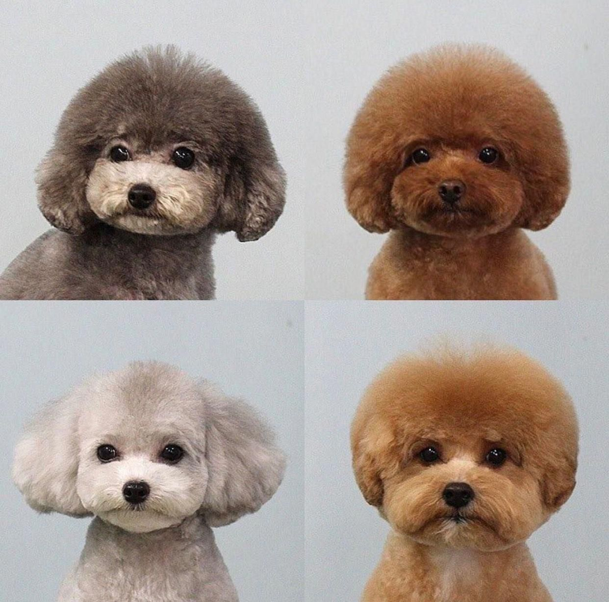 They Re Actually All Over More Than Likely Since They Are Two Of The Most Popular Canine Types In America According To The Dog Haircuts Dog Grooming Cute Dogs