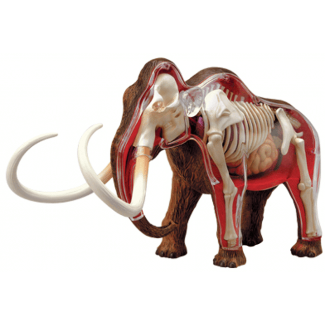 4D Vision – Woolly Mammoth Anatomy Model