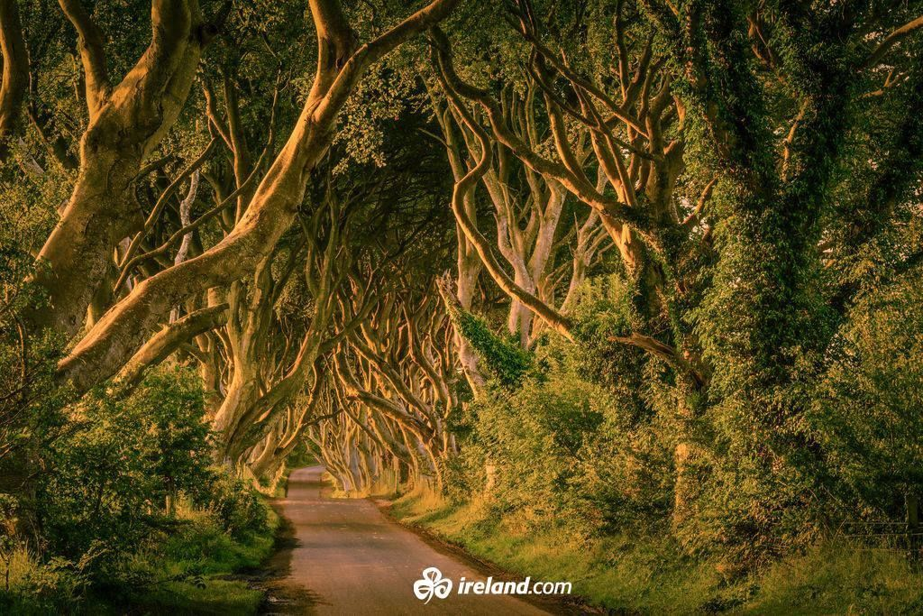 The Dark Hedges A Stunning Avenue Of Beech Trees In County Antrim Lives Up To Their Haunting Name In Hit Tv Series Game Of Thrones