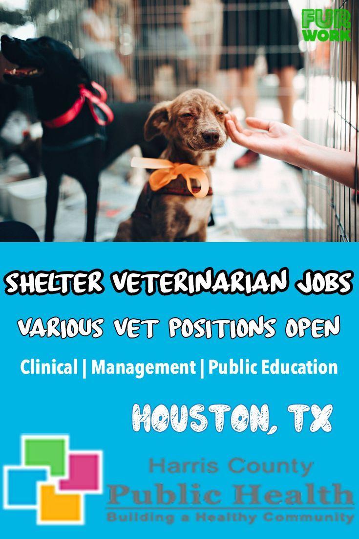 Animal services veterinarian wellness harris co