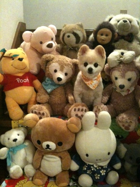 Find... the Real Puppy!