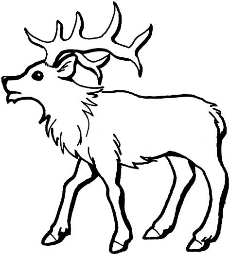 Young Elk Coloring Page Super Coloring Deer Coloring Pages