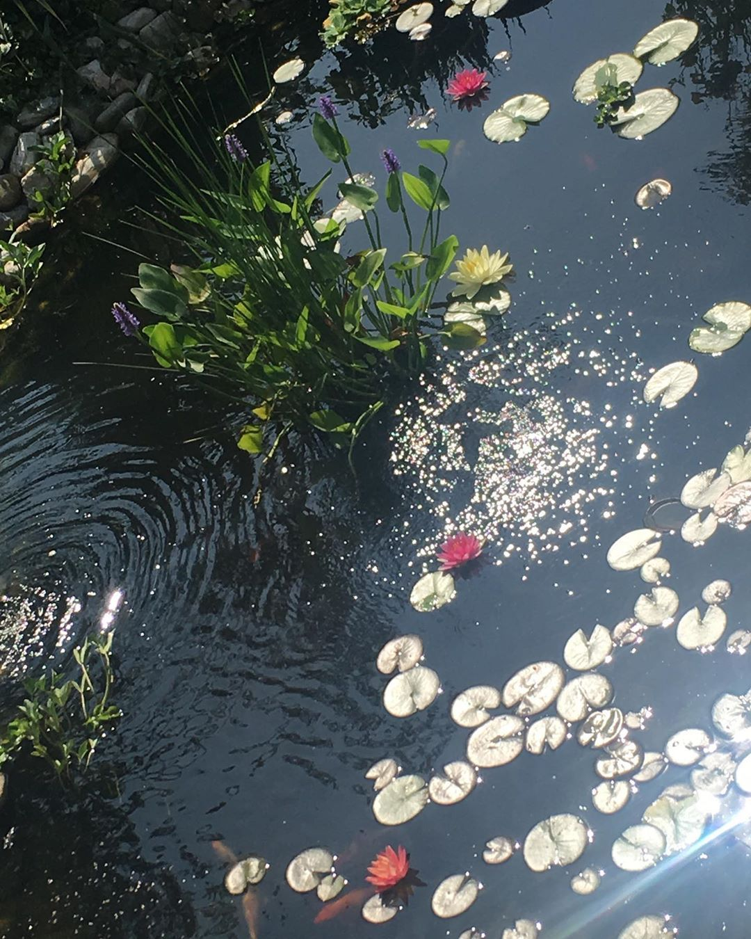 Garden Pond Equipment Near Me