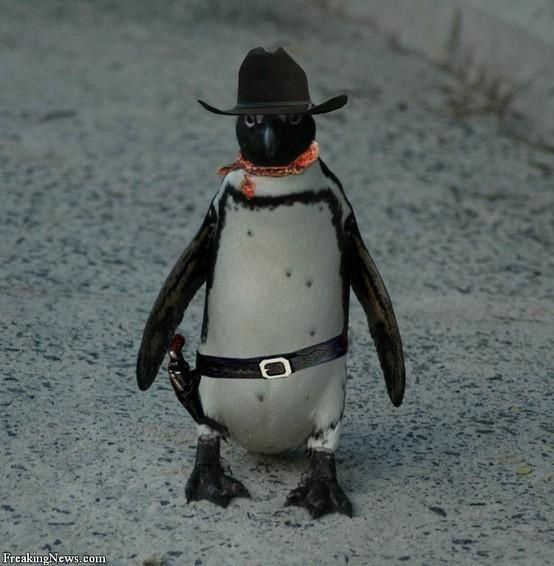 Image result for cowboy penguin