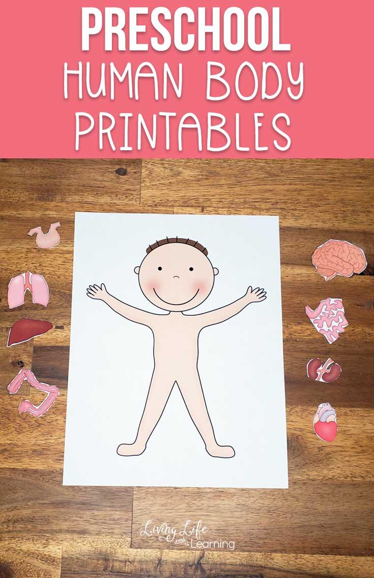 Preschool Human Body Printables | Kindergarten science ...