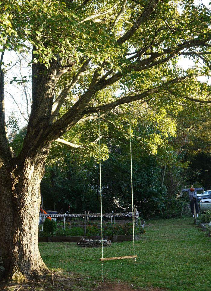 Mighty Oak Tree And Swing Old Oak Tree Oak Tree Tree Swing