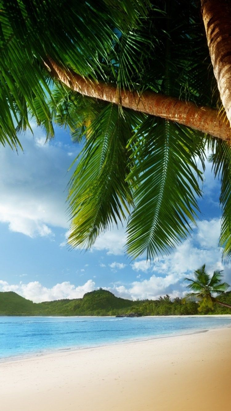 Palm Tree Background iPhone 6 Wallpaper 22011 Beach