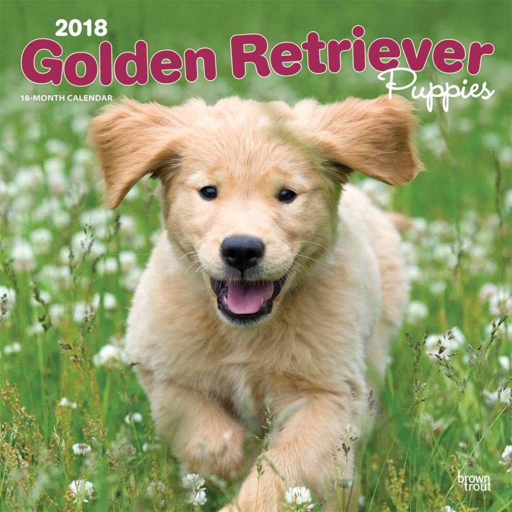 Golden Retriever Puppies 2020 Wall Calendar Puppies Dog Control