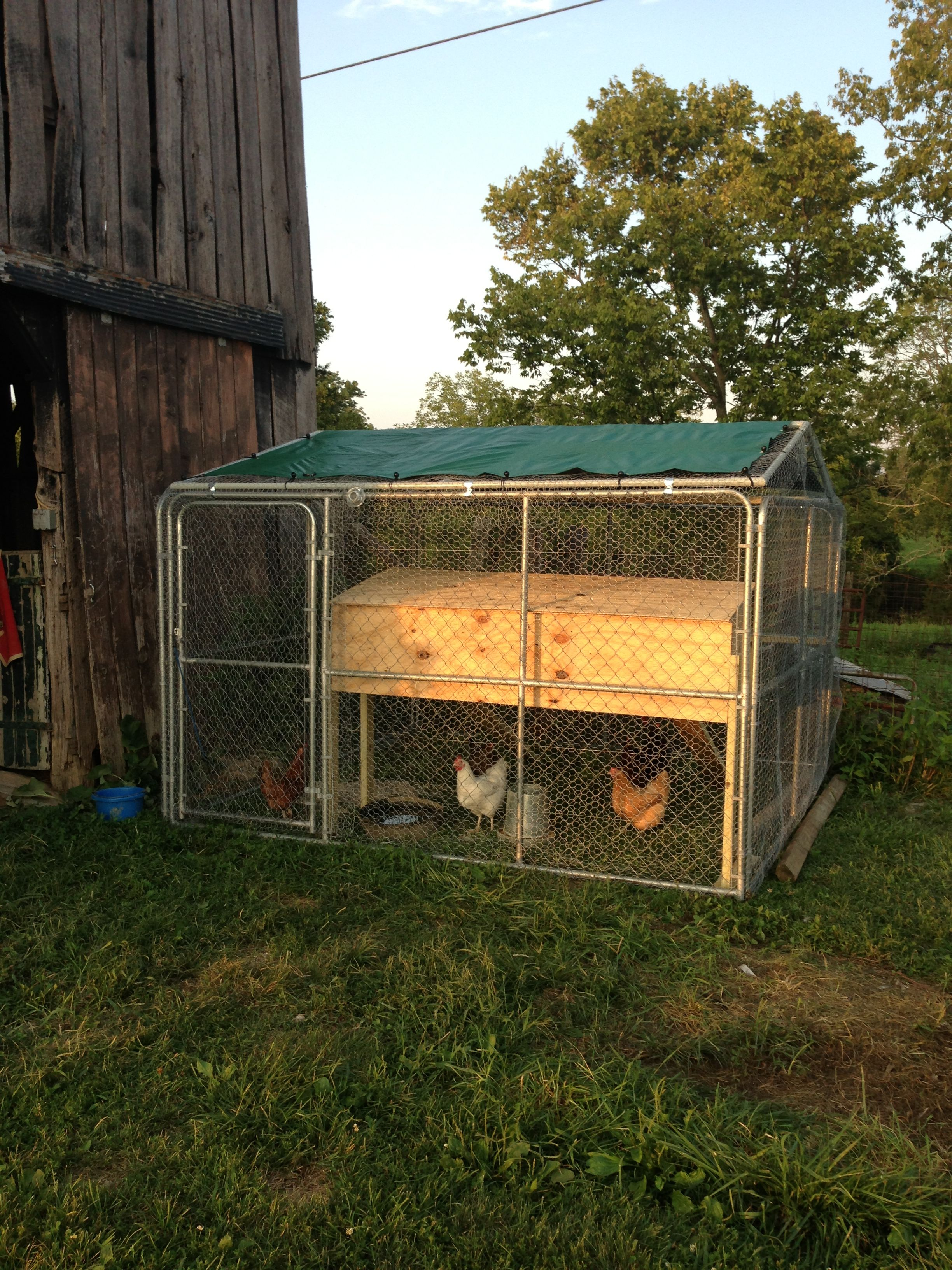 Chicken Coop From A 10x10 Dog Kennel Wrapped In Chicken Wire Cheap Dog Kennels 10x10 Dog Kennel Diy Dog Kennel