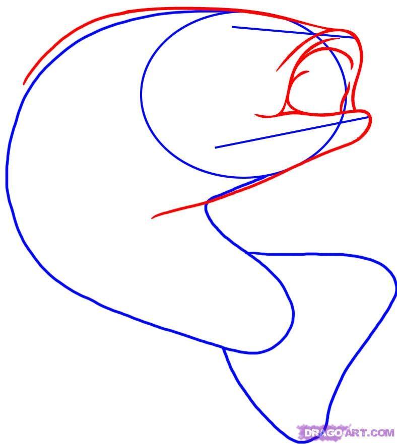 Bass Fish Drawings