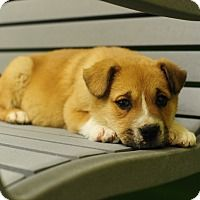 Adopt A Pet Jessie Nashville Tn Pets Puppy Adoption Puppies
