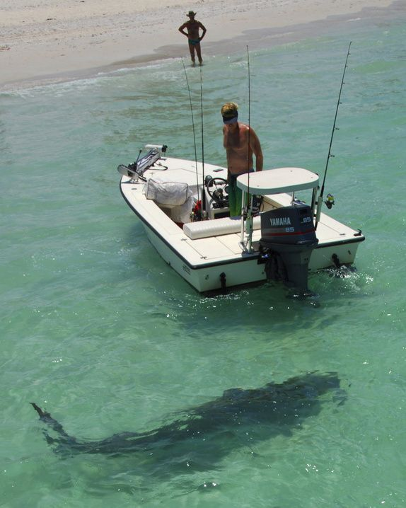 shark nokomis beach is located on casey key directly. Black Bedroom Furniture Sets. Home Design Ideas