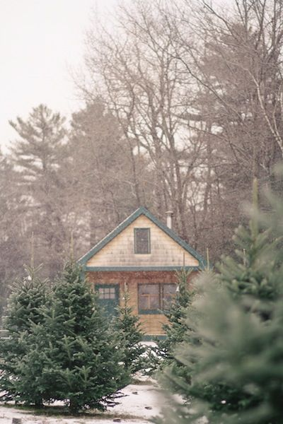 All the presents have been opened - some of them cherished, some of them returned. Soon, the needles on your Christmas tree will begin to brown and you'll have to begin the chore of carefully setting ornaments back in boxes, and winding strands of lights back on a spool. We're sure you're not…